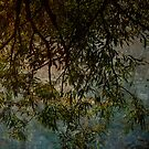 Branches reaching for water by miketaylor205