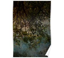 Branches reaching for water Poster