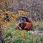Eating a comb by CPhotos