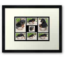 Collage Of Puppy Rottweiler Sitting In Food Bowl Framed Print