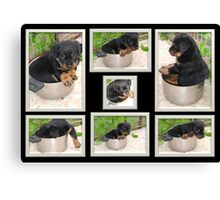 Collage Of Puppy Rottweiler Sitting In Food Bowl Canvas Print