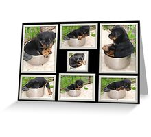 Collage Of Puppy Rottweiler Sitting In Food Bowl Greeting Card