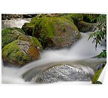 Rainforest gallery, cement creek Poster
