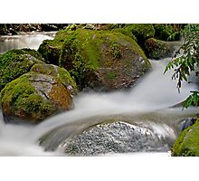 Rainforest gallery, cement creek Photographic Print