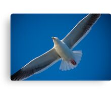 Free On Wings Canvas Print