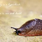 Slug ARE Beautiful by Jenny Martin