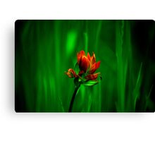 brush and canvas Canvas Print