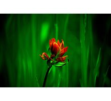 brush and canvas Photographic Print