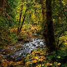 Just A Peak by Charles & Patricia   Harkins ~ Picture Oregon