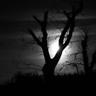 Moonlight and Tree in Black and White by Sue Robinson