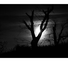 Moonlight and Tree in Black and White Photographic Print