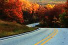 Autumn Curves by NatureGreeting Cards ©ccwri