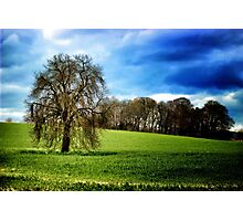 Lone tree on hillside, Yorkshire.  Photographic Print