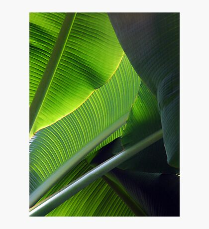 Green Five Photographic Print