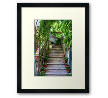 Potted plants and a dog on the steps Framed Print