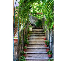Potted plants and a dog on the steps Photographic Print