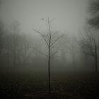 Lone Tree by Ian Ross Pettigrew