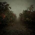 Path 003 by Ian Ross Pettigrew