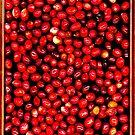 CRANBERRIES.  by Daniel Sorine