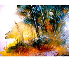 Wild Thicket.. Photographic Print