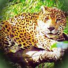 Beautiful Jaguar by Barry Hobbs