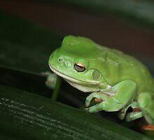 Green Frog by Mandy Gwan