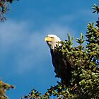 Eagle on South Access by Yukondick