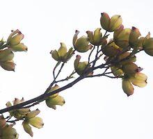 Remembering Spring by Juli Lyons
