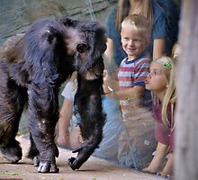 Children at the Zoo by Savannah Gibbs