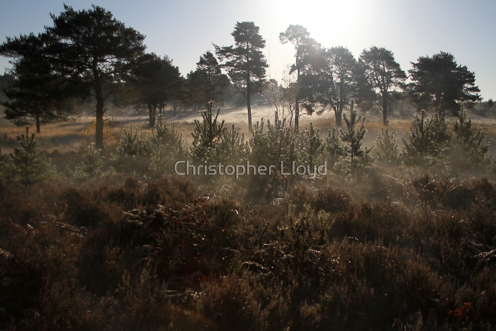 The Common by Christopher Lloyd