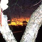 Evening Sunset in between split trunk of a crabapple tree. by Melba428