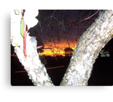 Evening Sunset in between split trunk of a crabapple tree. Canvas Print