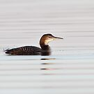Late Light Winter Plumage by Gary Fairhead