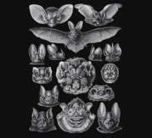 Bat Haeckel Illustration by monsterplanet