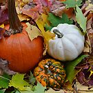 Pumpkins and Leaves by anchorsofhope