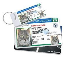 I have been looking for a very unique pet id tags for my cat by mypetdmv