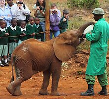 Baby Elephant Feeding by Carole-Anne