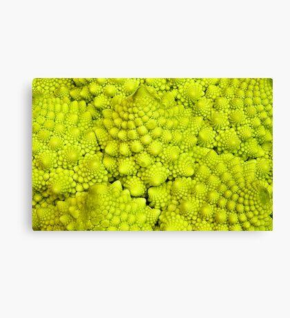 Romanesco Cauliflower Macro Canvas Print
