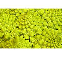 Romanesco Cauliflower Macro Photographic Print