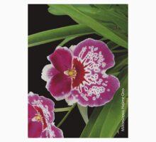 Miltoniopsis Hajime Ono by Mostlyorchids