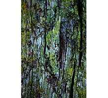 Lichen and Moss Photographic Print