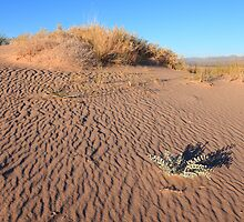 Kelso sand dunes by zumi