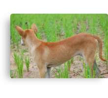 Rice paddy puppy Canvas Print