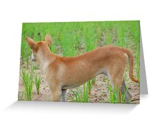 Rice paddy puppy Greeting Card