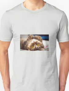 Cat - Feed me more T-Shirt