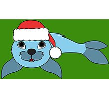 Light Blue Baby Seal with Christmas Red Santa Hat Photographic Print