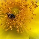 Busy Bee by Bette Devine
