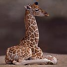 Baby Giraffe iPhone & iPod Case by Krys Bailey