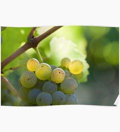 white grape, Poster