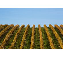 French vineyard during autumn Photographic Print